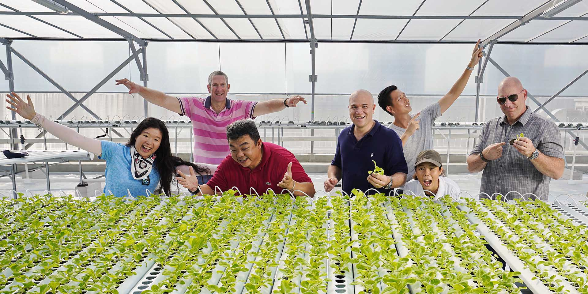 ComCrop - Singapore's first and only commercial rooftop farming company -  Comcrop